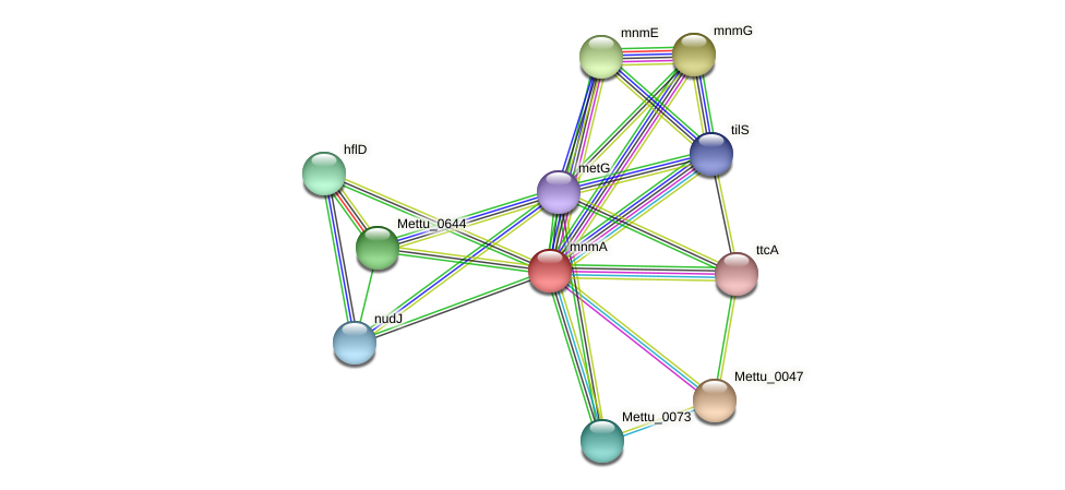 mnmA protein (Methylobacter tundripaludum) - STRING interaction network