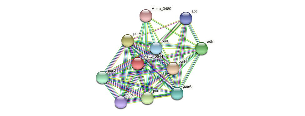 Mettu_0644 protein (Methylobacter tundripaludum) - STRING interaction network