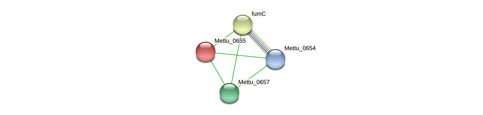 Mettu_0655 protein (Methylobacter tundripaludum) - STRING interaction network
