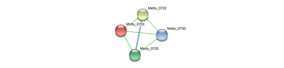 Mettu_0731 protein (Methylobacter tundripaludum) - STRING interaction network