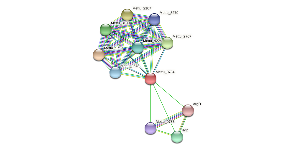 Mettu_0784 protein (Methylobacter tundripaludum) - STRING interaction network