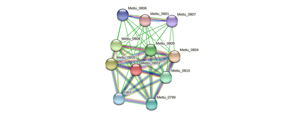 Mettu_0803 protein (Methylobacter tundripaludum) - STRING interaction network