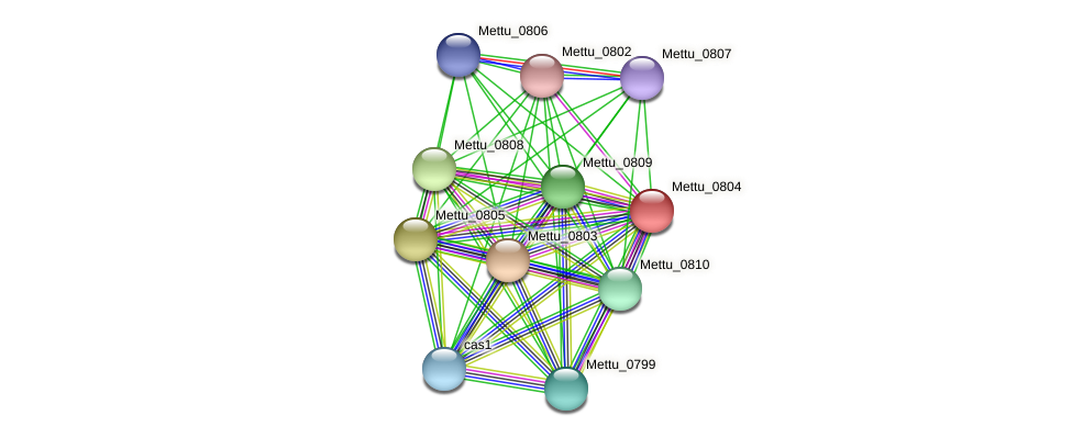 Mettu_0804 protein (Methylobacter tundripaludum) - STRING interaction network