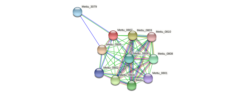 Mettu_0807 protein (Methylobacter tundripaludum) - STRING interaction network