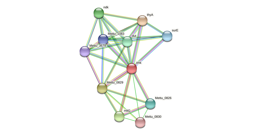 tmk protein (Methylobacter tundripaludum) - STRING interaction network