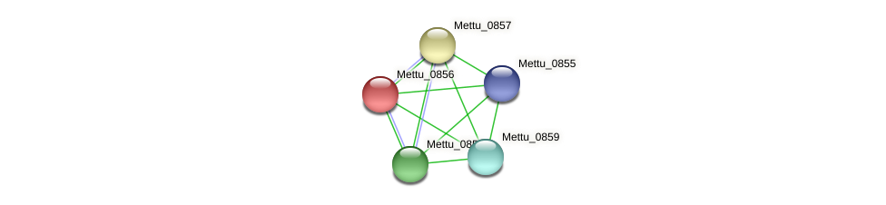 Mettu_0856 protein (Methylobacter tundripaludum) - STRING interaction network