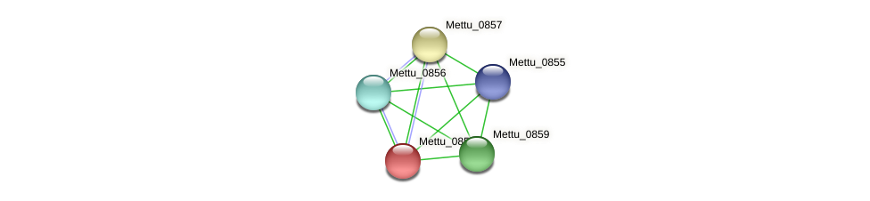 Mettu_0858 protein (Methylobacter tundripaludum) - STRING interaction network
