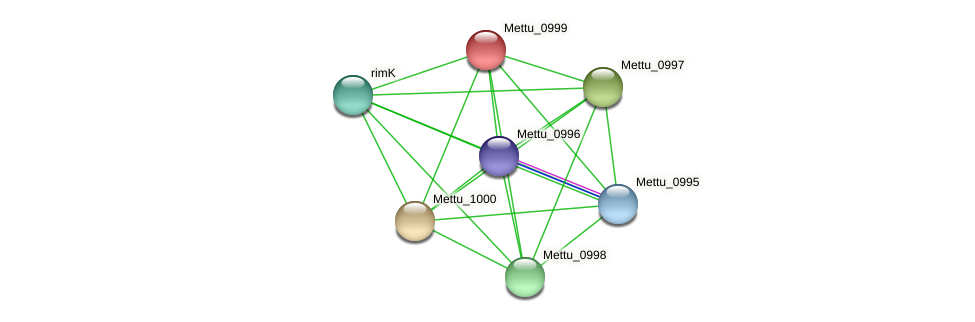 Mettu_0999 protein (Methylobacter tundripaludum) - STRING interaction network