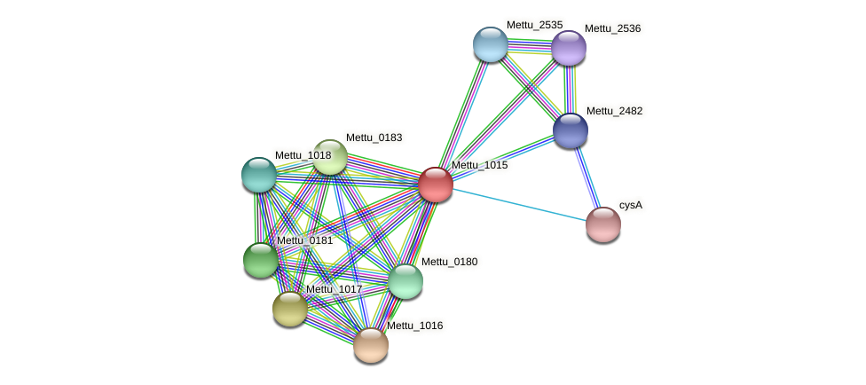 Mettu_1015 protein (Methylobacter tundripaludum) - STRING interaction network