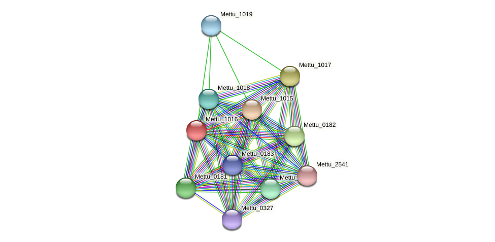 Mettu_1016 protein (Methylobacter tundripaludum) - STRING interaction network
