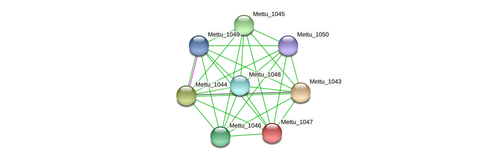 Mettu_1047 protein (Methylobacter tundripaludum) - STRING interaction network