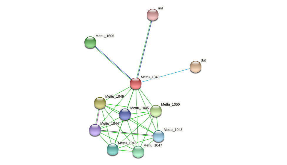 Mettu_1048 protein (Methylobacter tundripaludum) - STRING interaction network