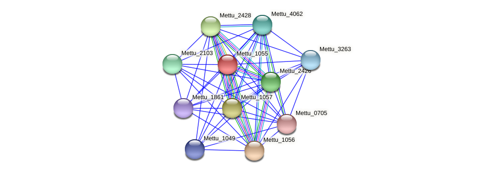 Mettu_1055 protein (Methylobacter tundripaludum) - STRING interaction network