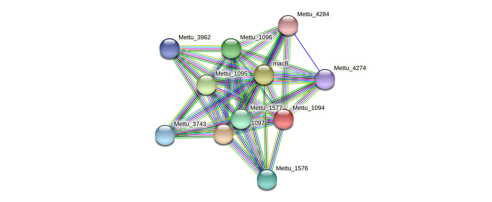 Mettu_1094 protein (Methylobacter tundripaludum) - STRING interaction network