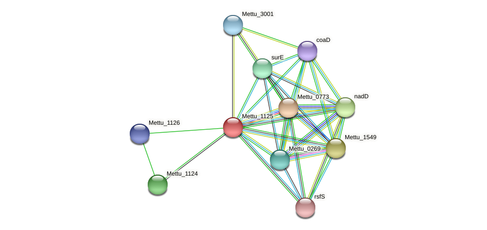 Mettu_1125 protein (Methylobacter tundripaludum) - STRING interaction network