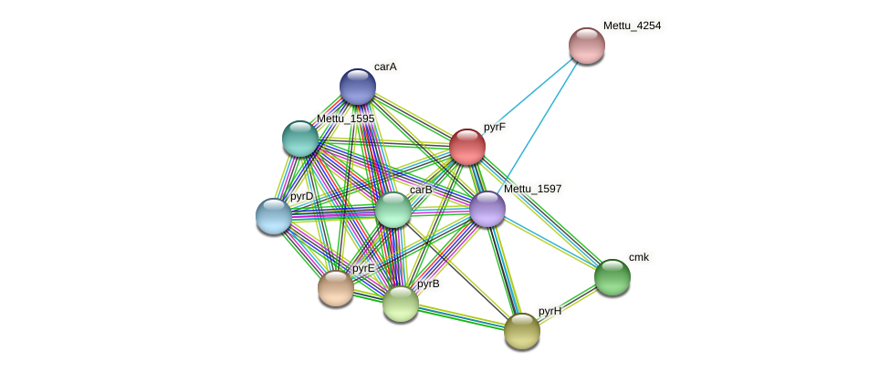 pyrF protein (Methylobacter tundripaludum) - STRING interaction network