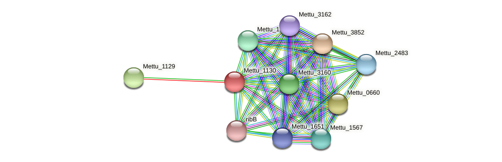 Mettu_1130 protein (Methylobacter tundripaludum) - STRING interaction network
