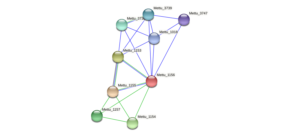 Mettu_1156 protein (Methylobacter tundripaludum) - STRING interaction network
