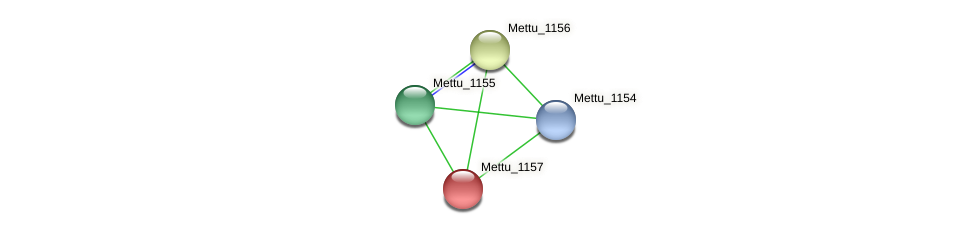 Mettu_1157 protein (Methylobacter tundripaludum) - STRING interaction network