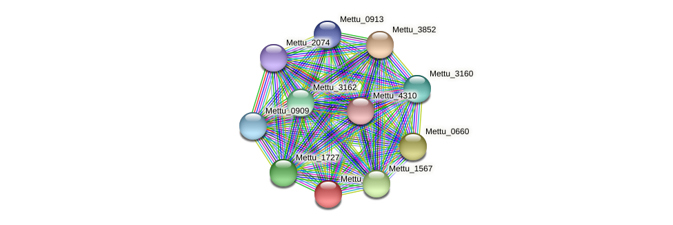 Mettu_1162 protein (Methylobacter tundripaludum) - STRING interaction network