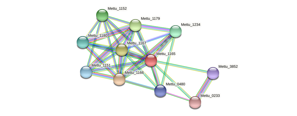 Mettu_1165 protein (Methylobacter tundripaludum) - STRING interaction network