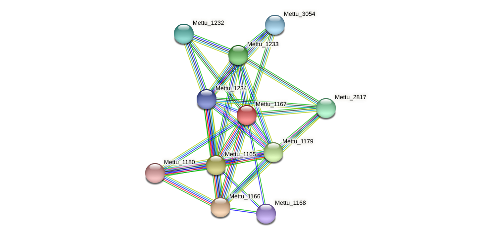 Mettu_1167 protein (Methylobacter tundripaludum) - STRING interaction network