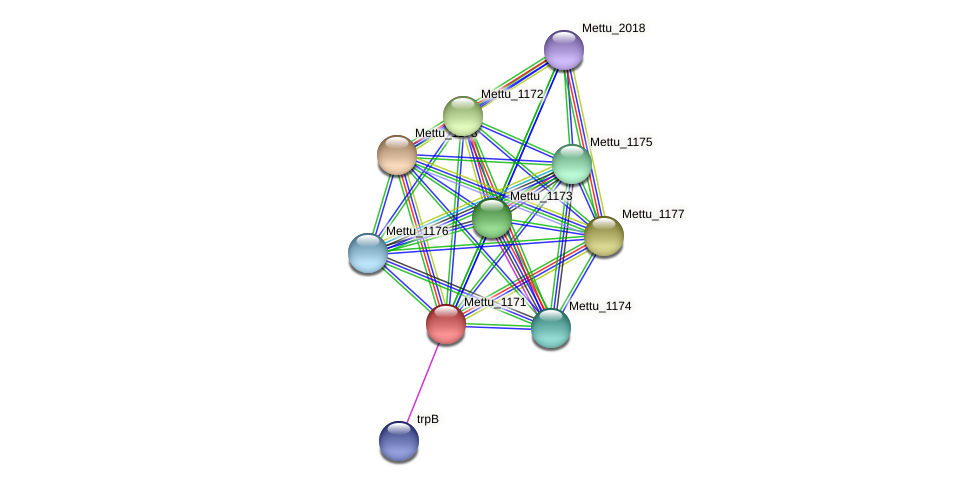 Mettu_1171 protein (Methylobacter tundripaludum) - STRING interaction network