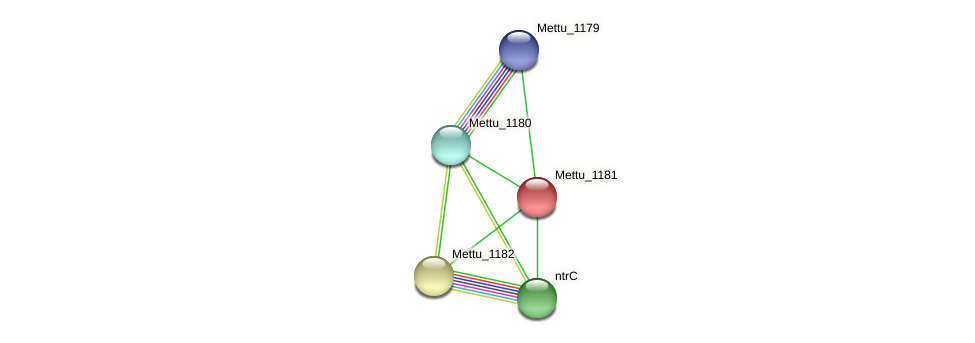 Mettu_1181 protein (Methylobacter tundripaludum) - STRING interaction network