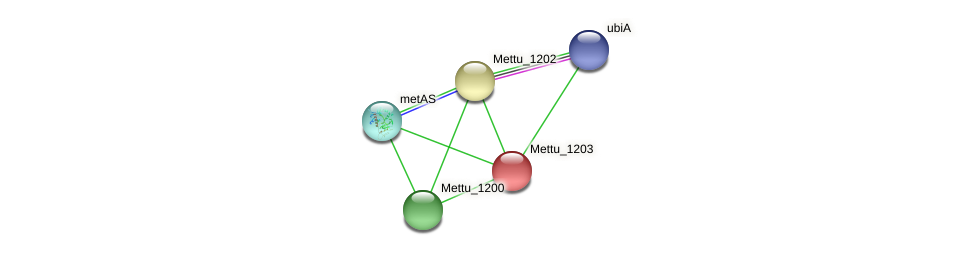 Mettu_1203 protein (Methylobacter tundripaludum) - STRING interaction network
