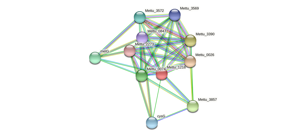 Mettu_1216 protein (Methylobacter tundripaludum) - STRING interaction network