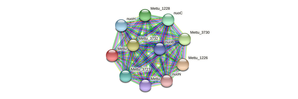 Mettu_1227 protein (Methylobacter tundripaludum) - STRING interaction network
