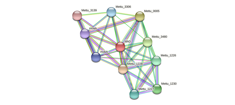 Mettu_1229 protein (Methylobacter tundripaludum) - STRING interaction network