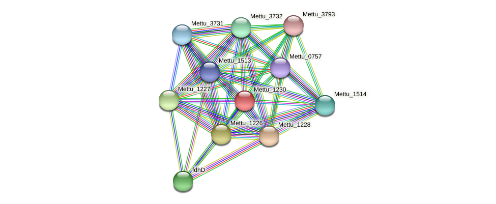 Mettu_1230 protein (Methylobacter tundripaludum) - STRING interaction network