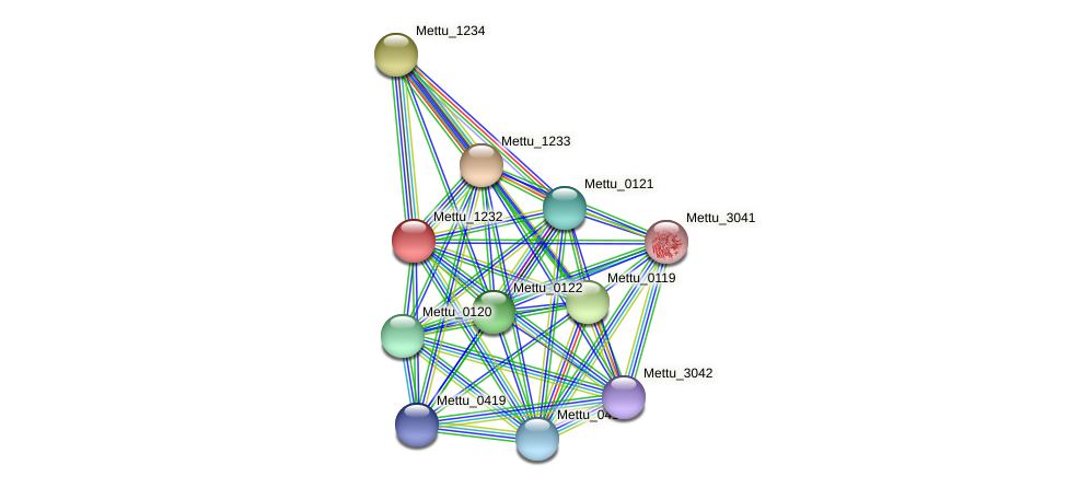 Mettu_1232 protein (Methylobacter tundripaludum) - STRING interaction network