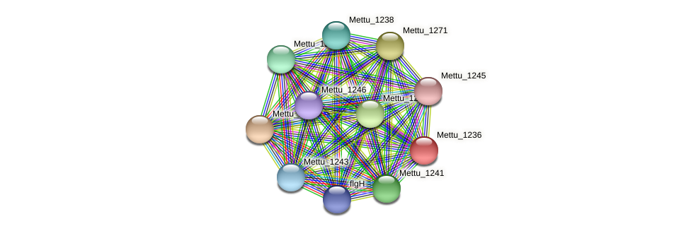 Mettu_1236 protein (Methylobacter tundripaludum) - STRING interaction network