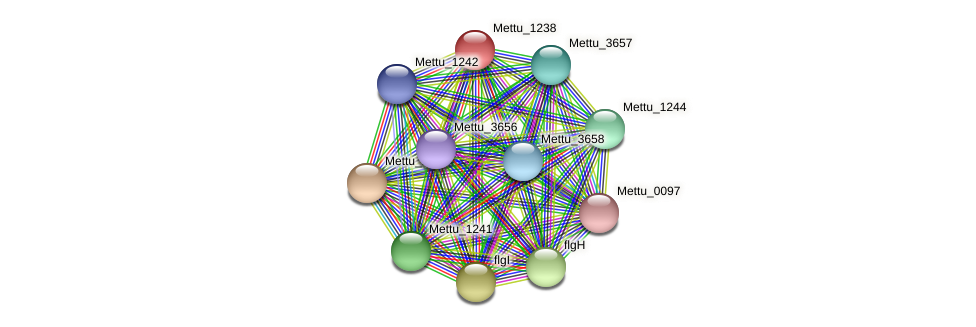 Mettu_1238 protein (Methylobacter tundripaludum) - STRING interaction network