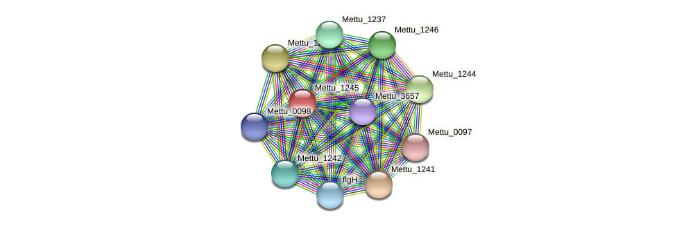 Mettu_1245 protein (Methylobacter tundripaludum) - STRING interaction network