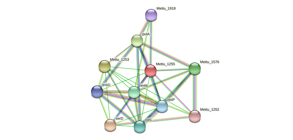 Mettu_1255 protein (Methylobacter tundripaludum) - STRING interaction network
