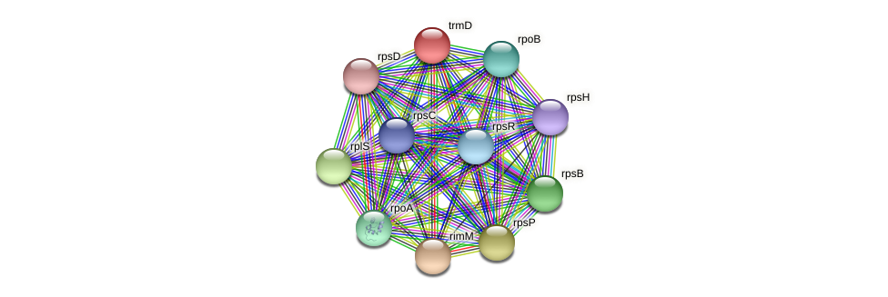trmD protein (Methylobacter tundripaludum) - STRING interaction network