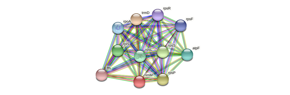 rimM protein (Methylobacter tundripaludum) - STRING interaction network