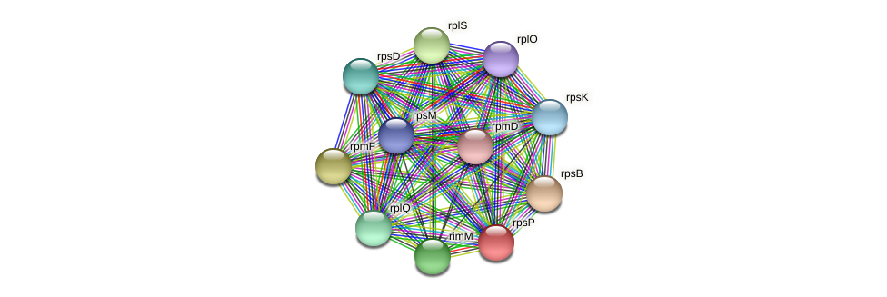 rpsP protein (Methylobacter tundripaludum) - STRING interaction network