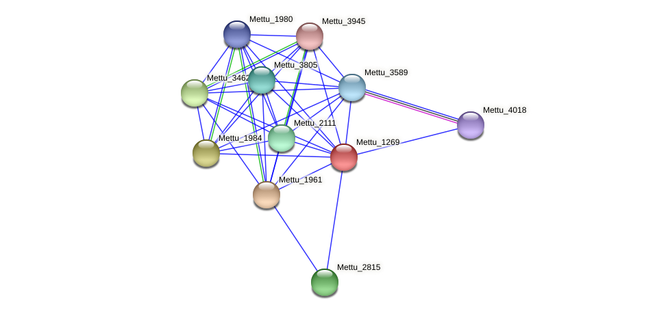 Mettu_1269 protein (Methylobacter tundripaludum) - STRING interaction network