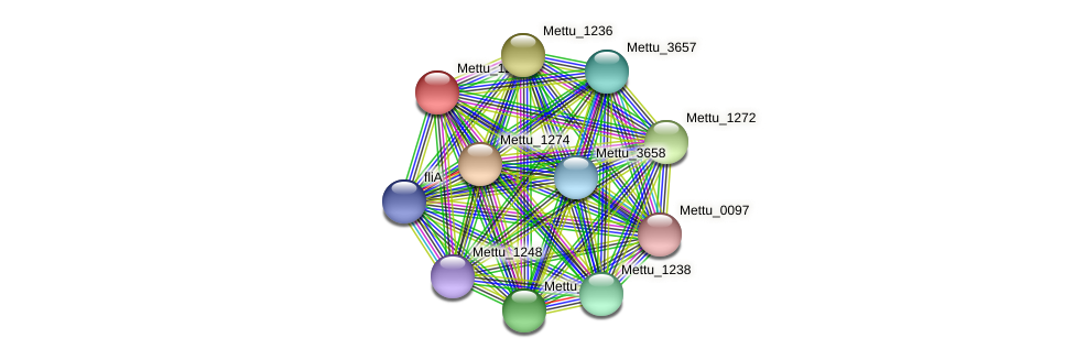 Mettu_1271 protein (Methylobacter tundripaludum) - STRING interaction network