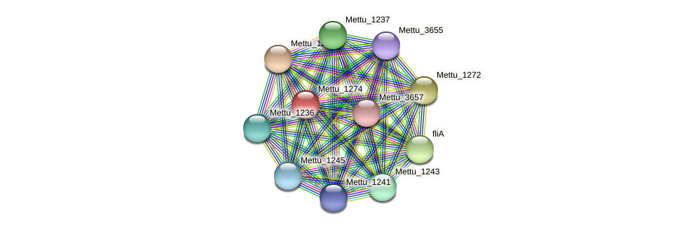 Mettu_1274 protein (Methylobacter tundripaludum) - STRING interaction network