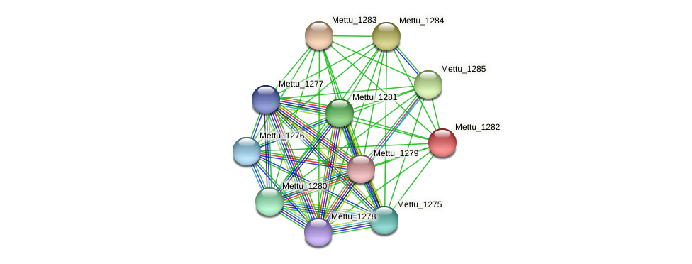 Mettu_1282 protein (Methylobacter tundripaludum) - STRING interaction network