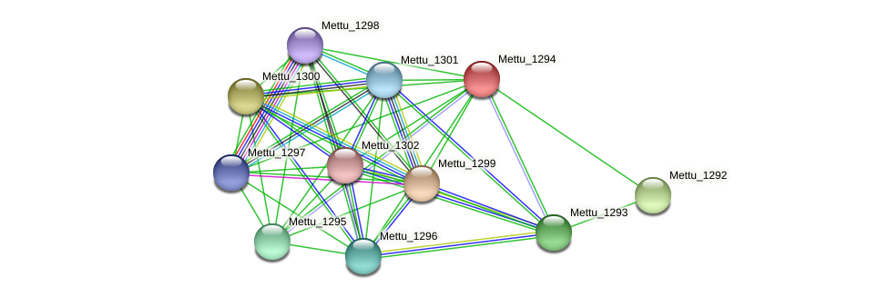 Mettu_1294 protein (Methylobacter tundripaludum) - STRING interaction network