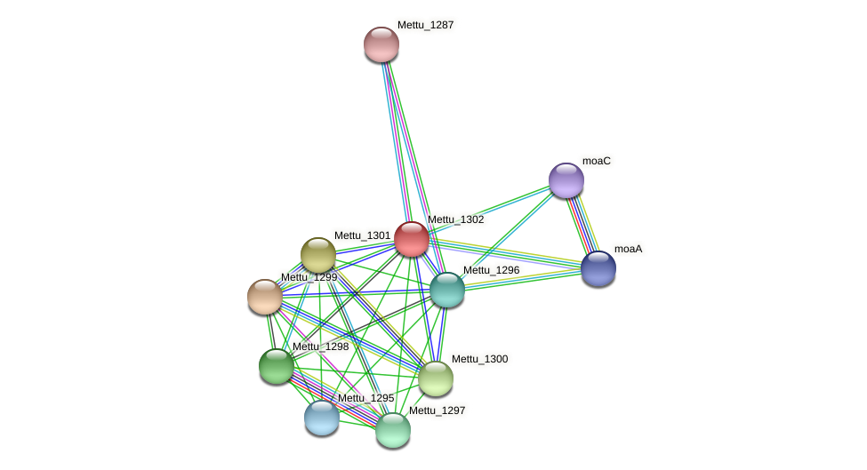 Mettu_1302 protein (Methylobacter tundripaludum) - STRING interaction network