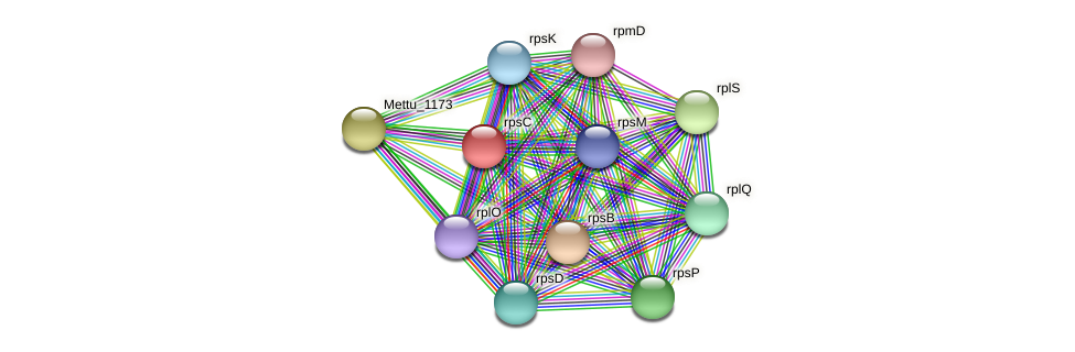 rpsC protein (Methylobacter tundripaludum) - STRING interaction network