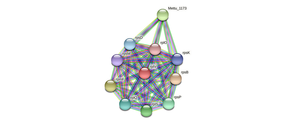 rplV protein (Methylobacter tundripaludum) - STRING interaction network