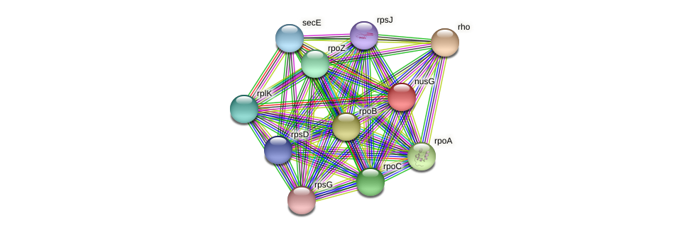 nusG protein (Methylobacter tundripaludum) - STRING interaction network